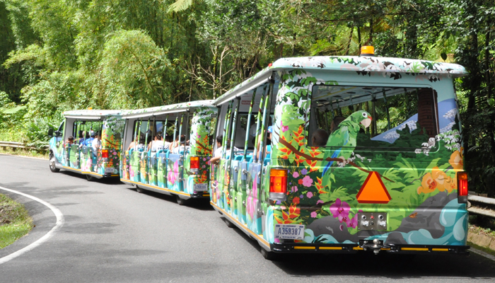 Tramstar at the El Yunque National Rain Forest in Puerto Rico